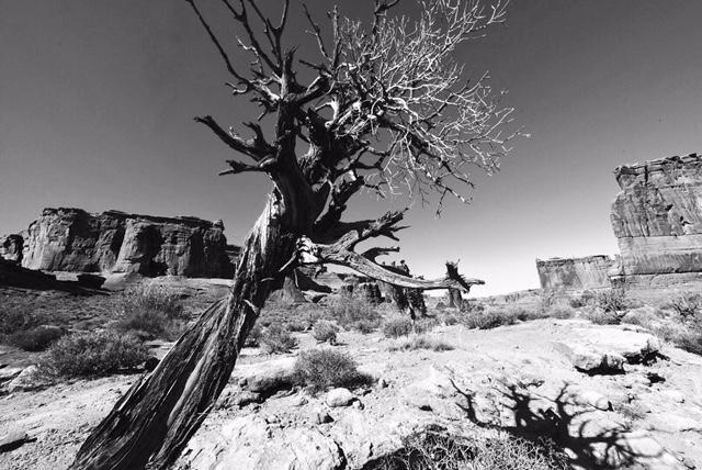 William Crawford — High Desert Scrub